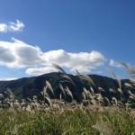 仙石原のすすき