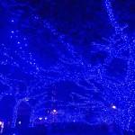目黒川の青の洞窟