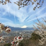 曽我梅林と富士山