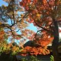 鎌倉奥地の紅葉スポット、瑞泉寺