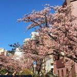 あたみ糸川桜まつり