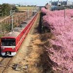 京浜急行と河津桜