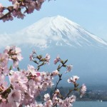 河口湖長崎公園の桜