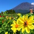 ぐりんぱでチューリップ&ダリアと富士山