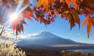 山中湖パノラマ台の富士山と紅葉