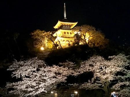 iPhoneで夜桜撮影