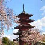 池上本門寺の五重塔と桜