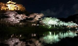 iPhoneで三渓園の夜桜撮影