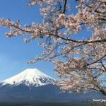 新倉山浅間公園から富士山と桜
