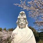 大船観音の桜