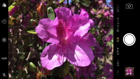 iPhone7 Plus標準カメラ