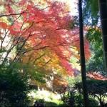 報国寺の竹林と紅葉