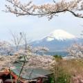 御殿場の仏舎利塔平和公園の富士山と桜