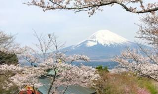 仏舎利塔平和公園の富士山と桜