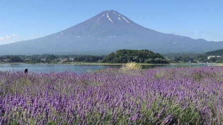 ハーブと富士山