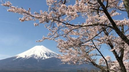 新倉山浅間公園で富士山と桜