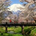 忍野八海と桜と富士山