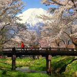 忍野八海の桜と富士山