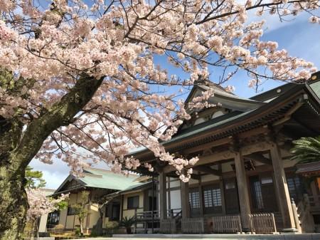 鎌倉光明寺の開山堂