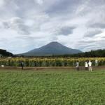 Switch 6 for iPhone 7 Plusの広角カメラで富士山とひまわりを撮影