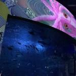 新江ノ島水族館ナイトワンダーアクアリウム2017
