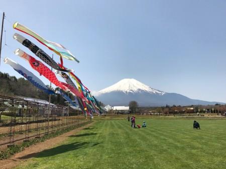 花の都公園の鯉のぼりと富士山