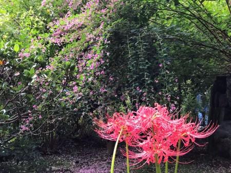 海蔵寺で彼岸花と萩