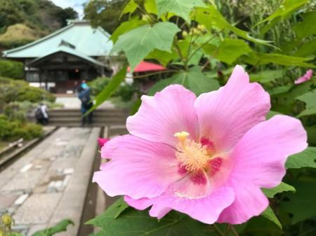 海蔵寺で扶養