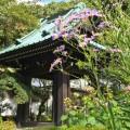 鎌倉奥地の花の寺、海蔵寺