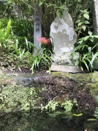 海蔵寺で彼岸花