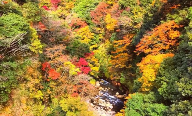箱根早川橋梁の紅葉