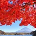 精進湖の紅葉と富士山、ベスト撮影タイムは13:30。