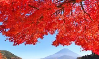 精進湖の紅葉と富士山