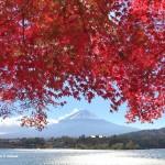 河口湖もみじトンネルの紅葉と富士山