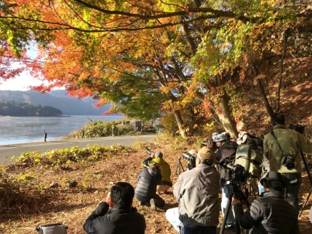 河口湖もみじトンネルの紅葉