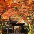 鎌倉、円覚寺の紅葉をiPhoneできれいに撮る