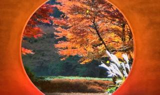 鎌倉 明月院の丸窓 紅葉