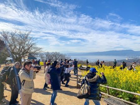 二宮、吾妻山公園の菜の花