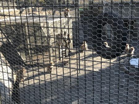 披露山公園の動物園