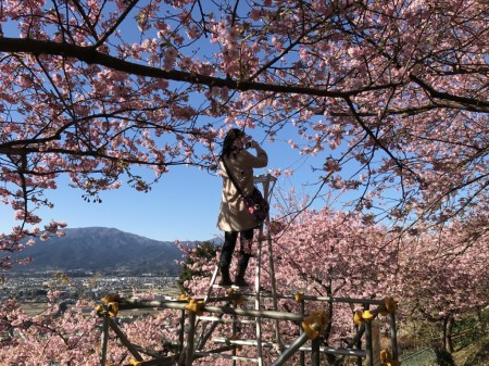 まつだ桜まつりの撮影スポットの脚立