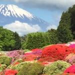 つつじ・しゃくなげフェアで富士山