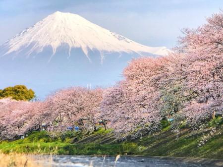 龍厳淵の桜と富士山