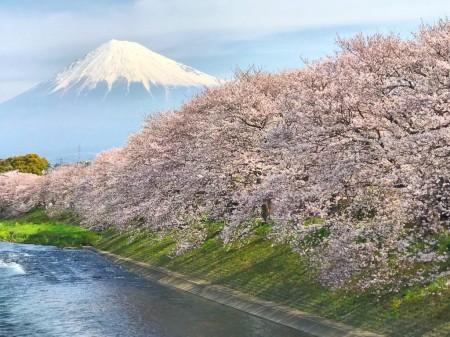 龍巌淵の富士山と桜