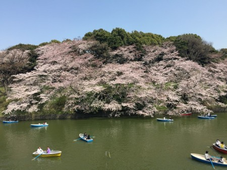 千鳥ヶ淵緑道の桜