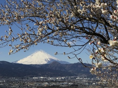 Switch 6 for iPhone 7 Plusで蘇我の梅と富士山を撮影