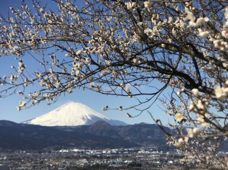Switch 6 for iPhone 7 Plusの二倍望遠レンズ装着で蘇我の梅と富士山を撮影