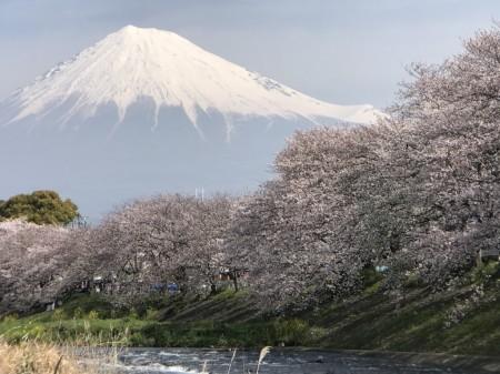 iPhone7 Plusで龍厳淵の桜と富士山を撮影