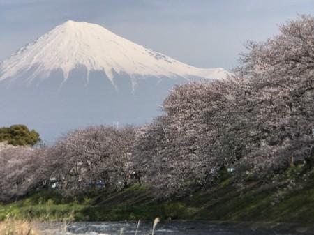 Switch 6 for iPhone 7 Plusの二倍望遠レンズ装着で龍厳淵の桜と富士山を撮影
