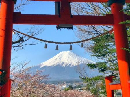 新倉山浅間公園の桜と富士山と鳥居