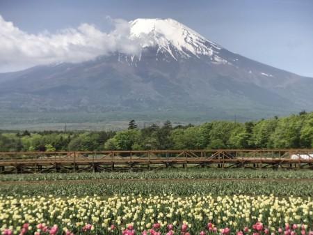 Switch6 for iPhone7 Plusの二倍ズームレンズで富士山とチューリップを撮影